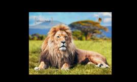 El rugido de un león puedo oírse hasta 8 kilómetros de dista