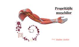 Proprietăţile muşchilor
