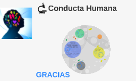 Copy of Conducta Humana