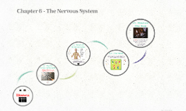 Chapter 6 - The Nervous System