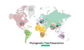 Phylogenetic Tree Presentation