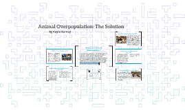 Animal Overpopulation: The Solution