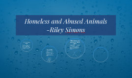 Homeless and Abused Animals