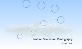 Natural Succession Photography