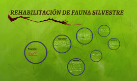 Rehabilitación de Fauna Silvestre