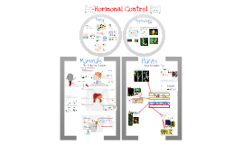 Copy of AP Bio- Physiology 6:  Hormonal Control