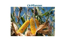 C4-Pflanzen