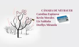 CÁMARA DE NEUBAUER