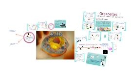 Cells & Organelles