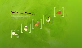 Ciclo vital del pollito
