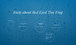 Facts about Red Eyed Tree Frog