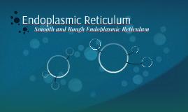 Endoplasmic Ruticulum