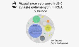 Copy of Vizualizace mikroRNA a jejích funkcí v buňce