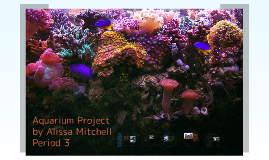 Aquarium Project by Alissa Mitchell