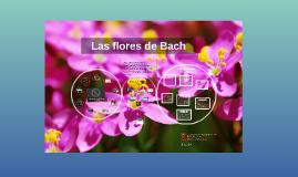Copy of Las flores de Bach