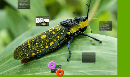 9/20 (Bio) Food Web Project 3