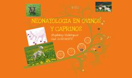 Neonatologia en ovinos y caprinos