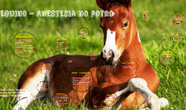 Copy of Equino - Anestesia no potro