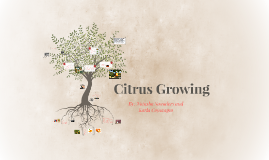 Citrus Growing