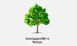 Estruturação do REDD+