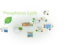 Copy of Phosphorus Cycle