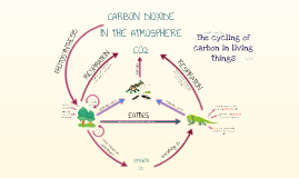 Copy of Carbon Cycle (in the biosphere)