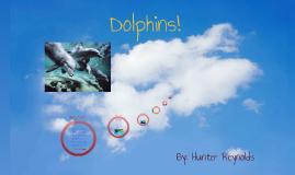 yo people im a dolphin