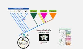 Botânica II - Surgimento e Evolução da Flor, Angiospermas Basais