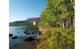 Ecosistemas Beatriz