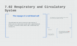 7.02 Respiratory and Circulatory System
