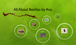 Copy of All About Beetles