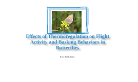 Thermoregulation of Butterflies