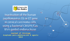 Inactivation of the human papillomavirus E6 or E7 gene in ce