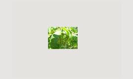 opdracht vakdidactiek I: fotosynthese