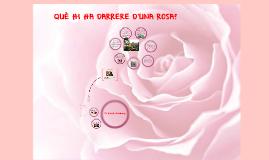 Què hi ha darrere d'una rosa?