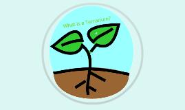 Terrarium Lab