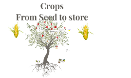 Copy of Crops
