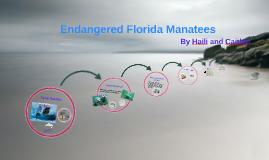 Copy of Endangered Florida Manatees