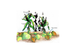 Development of an Organic Pest Management Program