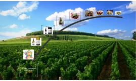 Les Repas Traditionnels de Bourgogne