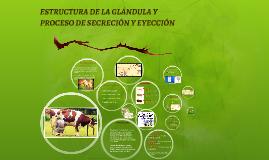 ESTRUCTURA DE LA GLÁNDULA Y PROCESOS DE SECRECION Y EYECCION