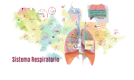 S. respiratorio
