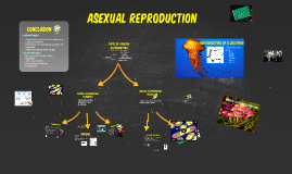 Copy of Copy of Asexual reproduction