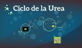 Copy of Ciclo de la Urea
