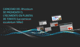 CAPACIDAD DEL Rhizobium DE PROMOVER EL CRECIMIENTO EN PLANTA