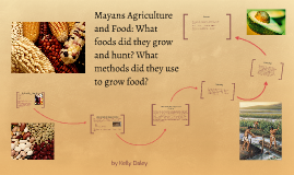 Copy of Mayans Agriculture and Food: What foods did they grow and hu
