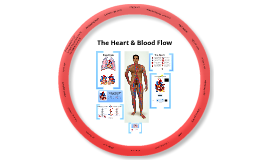 The Heart & Blood Flow