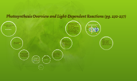 Photosynthesis Overview and Light-Dependent Reactions