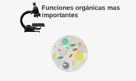 Funciones organicas mas importantes