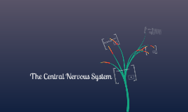 The Central Nervous System